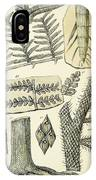 Paleozoic Flora, Calamites, Illustration IPhone Case