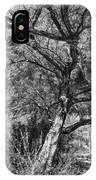Palo Verde In Black And White IPhone Case