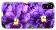 Pansy From The Chalon Supreme Primed Mix IPhone Case