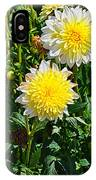 Pasadoble Dahlia IPhone Case