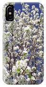 Pear Tree Blossoms In Spring IPhone Case