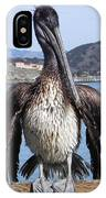 Pelican At Avila Beach Ca IPhone Case