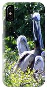 Pelican Father With 4 Young IPhone Case