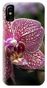 Phalaenopsis Helen Alice Mary 2308 IPhone Case