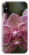 Phalaenopsis Helen Alice Mary 2346 IPhone Case