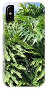 Philodendron 1 IPhone Case