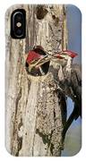 Pileated Woodpecker And Chick IPhone Case