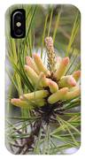Pine Catkins IPhone Case