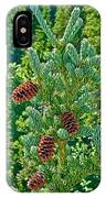 Pine Cones On Spruce Tree In Rancheria Falls Recreation Site-yt IPhone Case