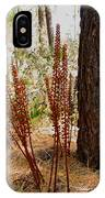 Pine Drops And Ponderosa Pine In Des Chutes Nf-or  IPhone Case
