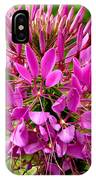 Pink Cleome Flower IPhone Case