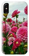 Pink Dahlia Field IPhone Case