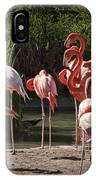 Pink Falmingos At The San Diego Zoo IPhone Case
