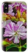 Pink Flower On Brier Island In Digby Neck-ns IPhone Case