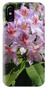 Pink Rhododendron In Sunshine IPhone Case