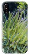 Pink Tipped Giant Sea Anemone IPhone Case