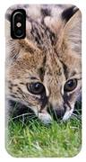 Playful Serval IPhone Case