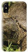 Pointed Nose Florida Softshell Turtle - Apalone Ferox IPhone Case