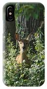 Portrait Of A Whitetail Fawn II IPhone Case