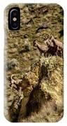 Posing Bighorn Sheep IPhone Case