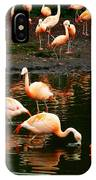 Pretty Flamingos IPhone Case
