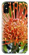 Protea - One Of The Oldest Flowers On Earth IPhone Case