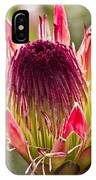 Protea Sugarbush IPhone Case