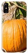 Pumpkin Growing In Pumpkin Field IPhone Case