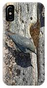 Pygmy Nuthatch At Nest IPhone Case