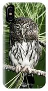 Pygmy Owl IPhone Case
