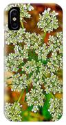 Queen Anne's Lace Or Wild Carrot Near Alamo-michigan IPhone Case