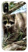 Raccoon In A Tree IPhone Case