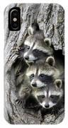 Raccoon Trio At Den Minnesota IPhone Case by Jurgen and Christine Sohns
