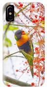 Rainbow Lorikeet In Flame Tree IPhone Case