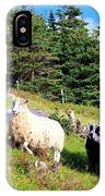 Ram And Ewes IPhone Case