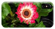 Red And White Gerber Daisy IPhone Case