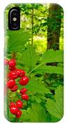 Red Baneberry Along Rivier Du Nord Trail In The Laurentians-qc IPhone Case