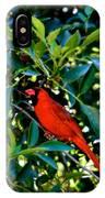 Red Cardinal 1 IPhone Case