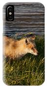 Red Fox Hunting The Edges At Sunset IPhone Case