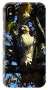 Red Tailed Hawk In Tree IPhone Case