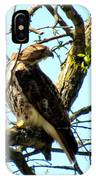 Red Tailed Interest IPhone Case