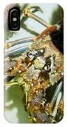 Reef Lobster Close Up Spotlight IPhone Case