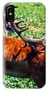 Reindeer Scratch IPhone Case