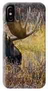 Resting Moose IPhone Case