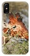 Reticulated Giraffe Browsing Acacia Kenya IPhone Case