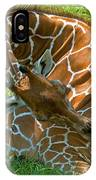Reticulated Giraffe Sleeping IPhone Case