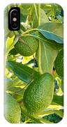 Ripe Avocado Fruits Growing On Tree As Crop IPhone Case