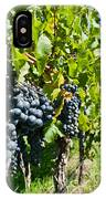 Ripe Grapes Right Before Harvest In The Summer Sun IPhone Case