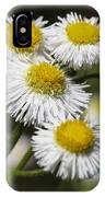 Robin's Plantain Wildflowers - Erigeron Pulchellus IPhone Case