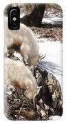 Rocky Mountain Goats - Mother And Baby IPhone Case